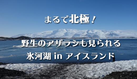 アイスランド旅行で外せない観光地|氷河湖でアザラシを見よう